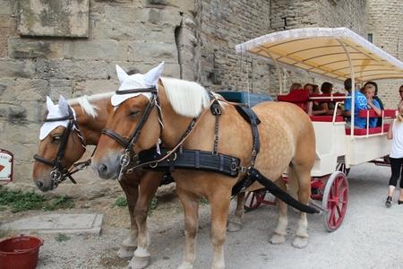 Carcassonne4_9